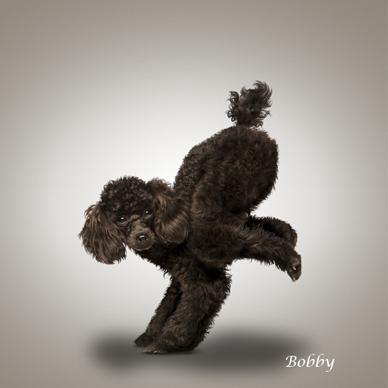 Yoga_dogs16