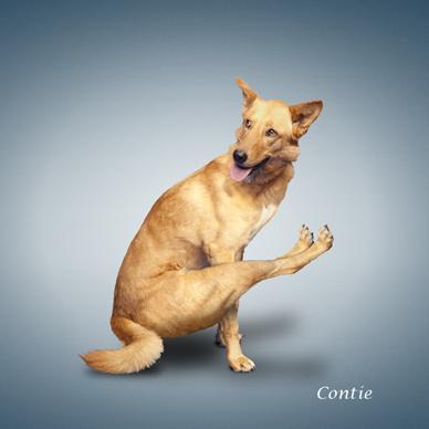 Yoga_dogs18