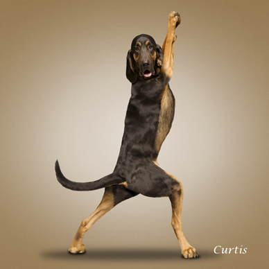 Yoga_dogs19