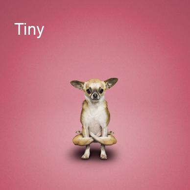 Yoga_dogs2