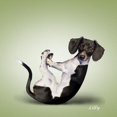 Yoga_dogs21