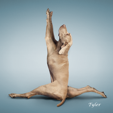 Yoga_dogs26
