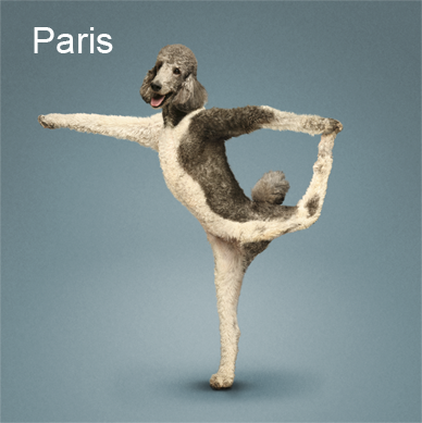 Yoga_dogs3