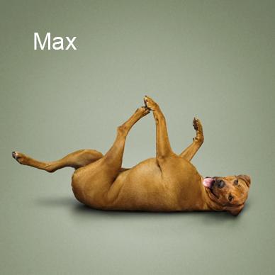 Yoga_dogs8