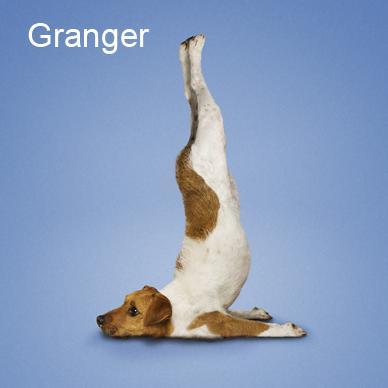 Yoga_dogs9