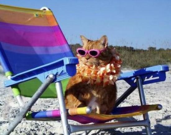 cat-beachside-16
