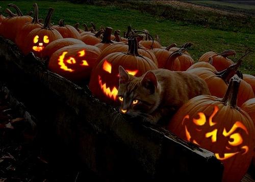 ハロウィンかぼちゃと猫