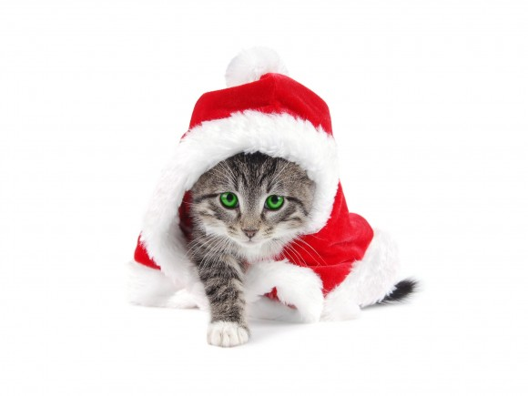 cat-with-santa-claus-hat