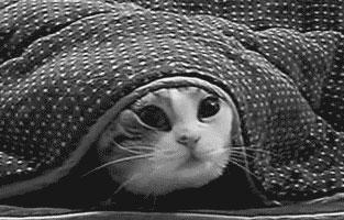 cute-cat-anime-gif