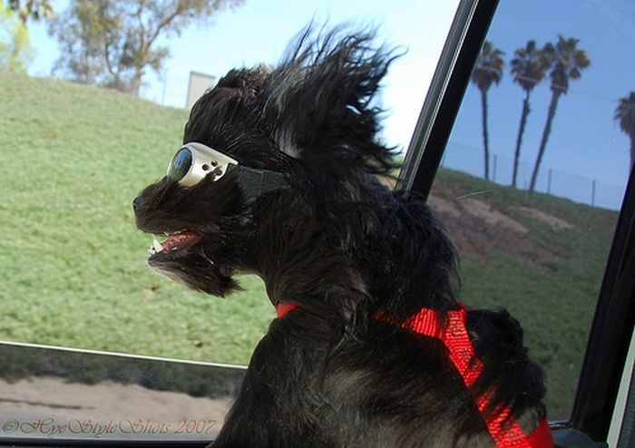 dog-and-wind