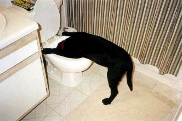 drunk-animal-pictures-02