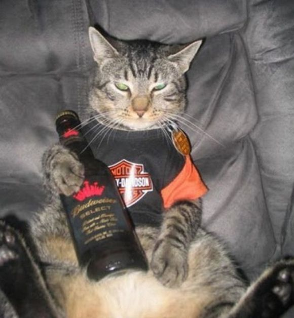 drunk-animal-pictures-04