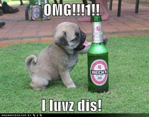 drunk-animal-pictures-13