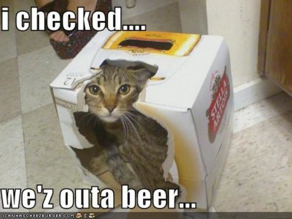 drunk-animal-pictures-22
