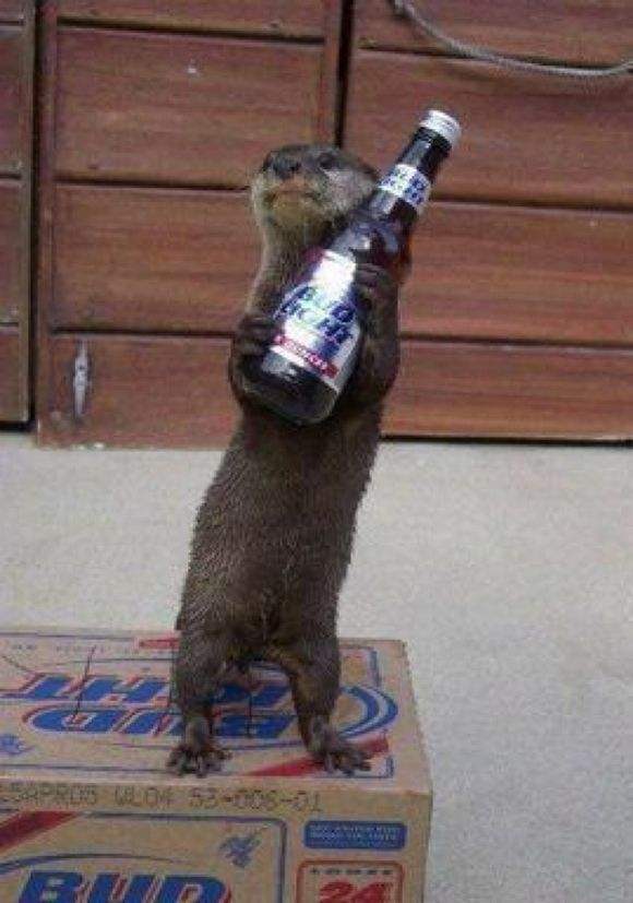 drunk-animal-pictures-31