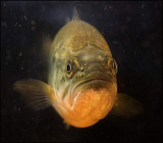 Fish Face 46833
