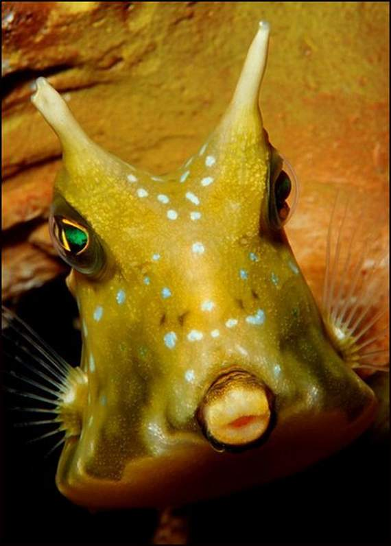 fish-faces-15