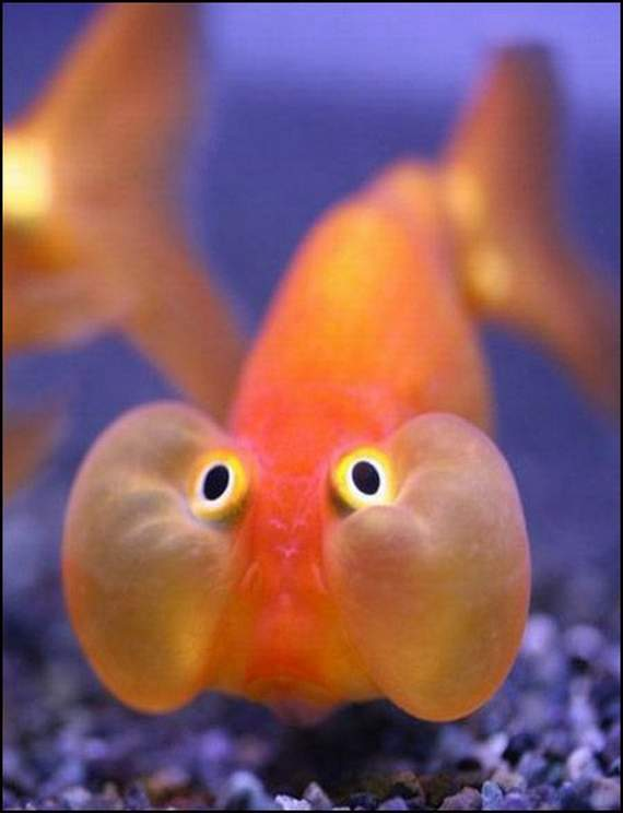 fish-faces-21