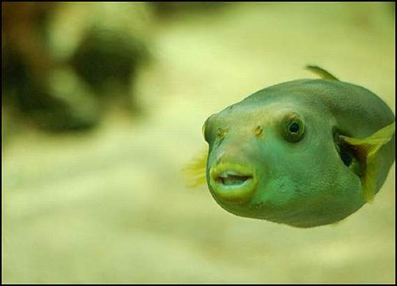 fish-faces-26