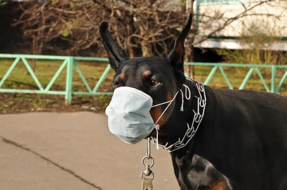 funny-dog-mask-19
