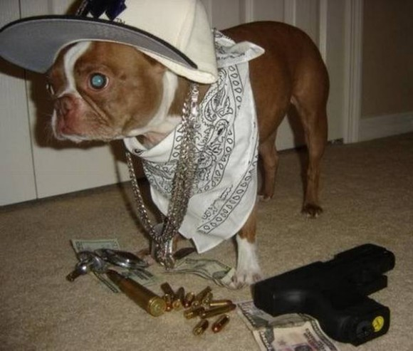 gangster-dogs-02