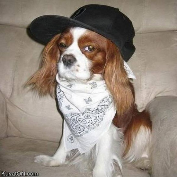 gangster-dogs-07