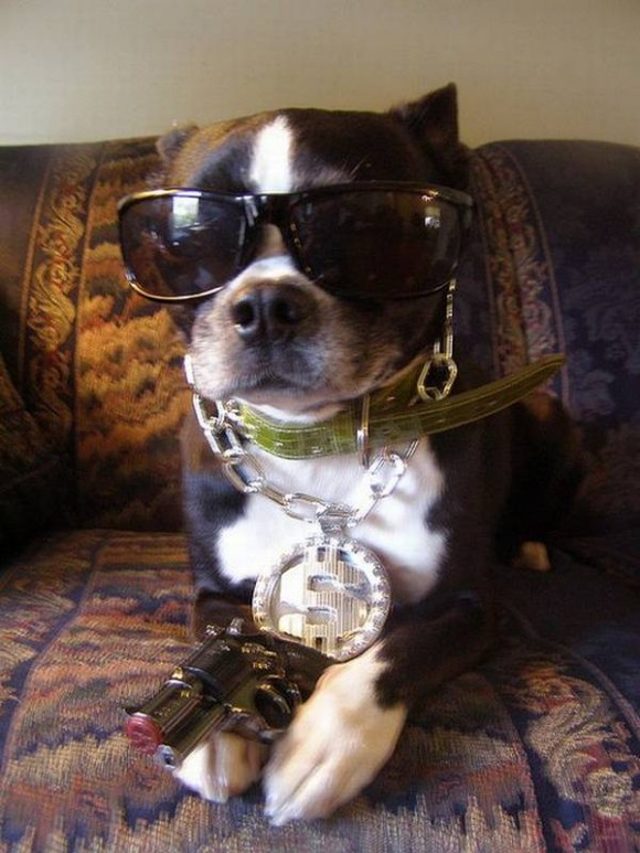 gangster-dogs-08