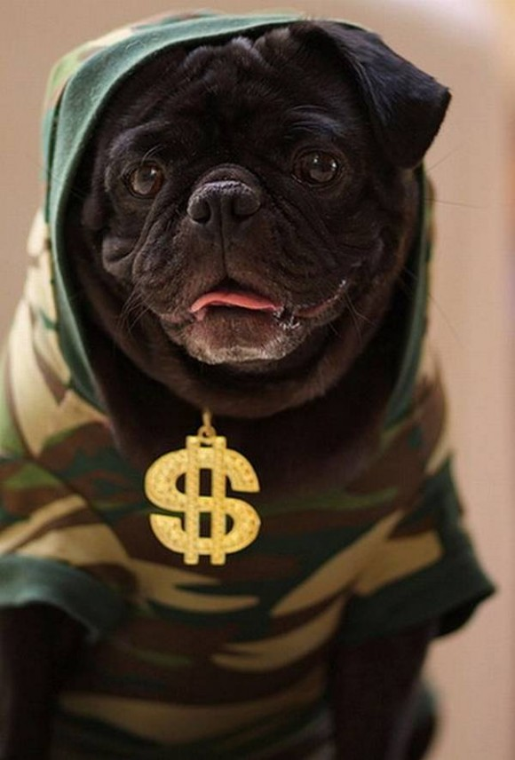 gangster-dogs-10
