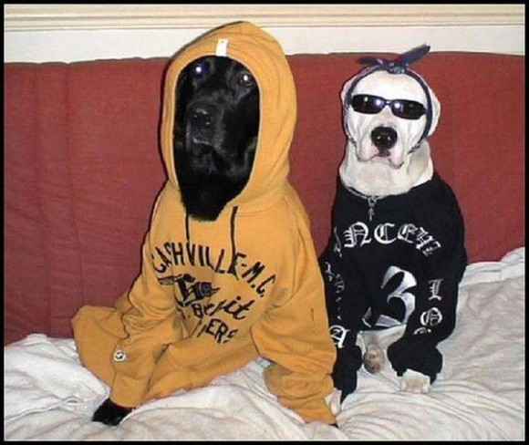 gangster-dogs-13