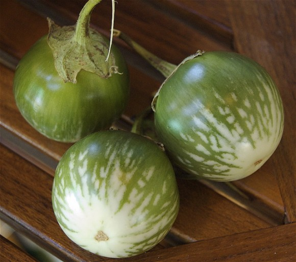 green-stripe-eggplant