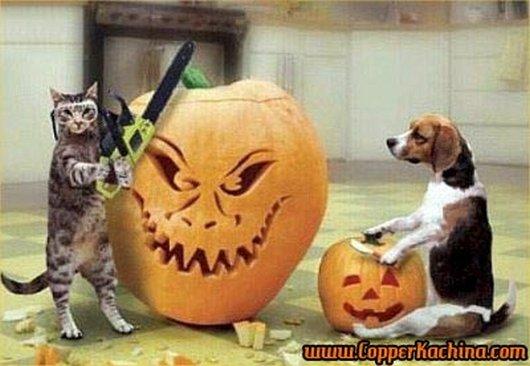 ジャックランタンを作る猫