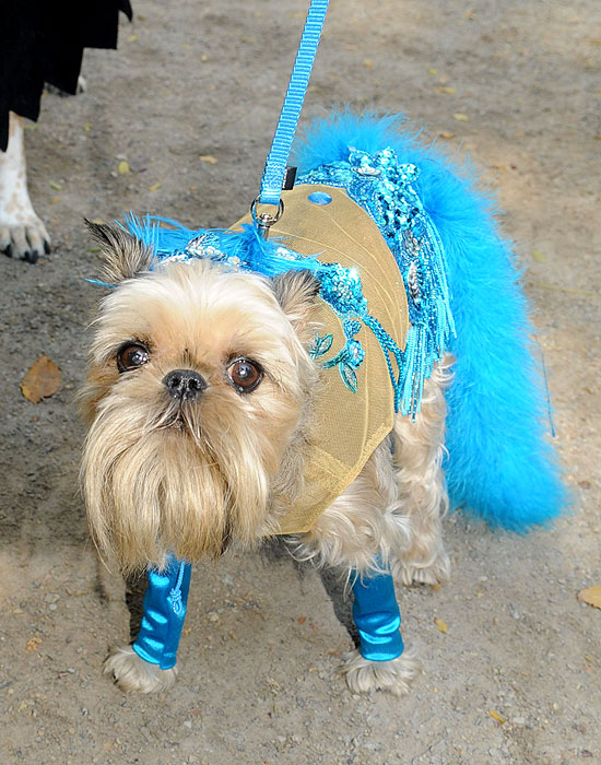 halloween-doggy-costume-best-03