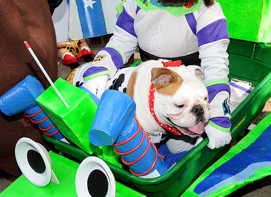 halloween-doggy-costume-best-06
