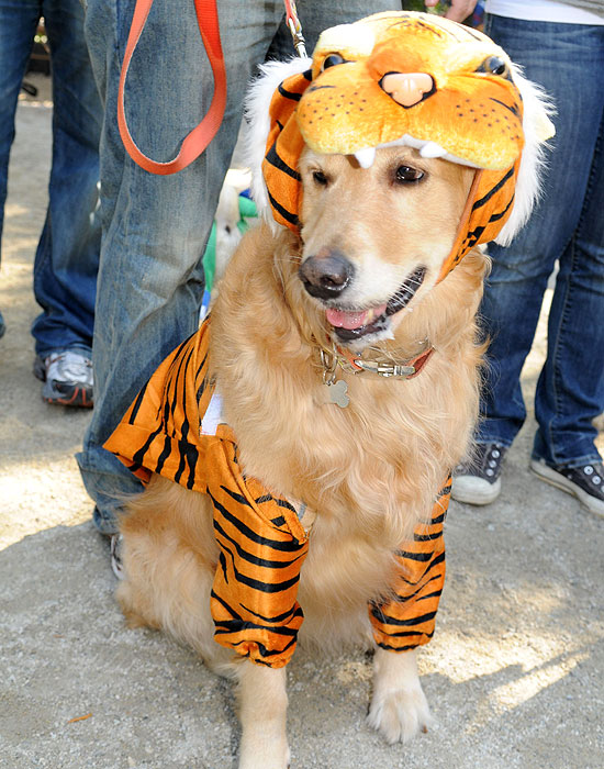 halloween-doggy-costume-best-07