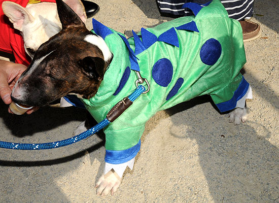 halloween-doggy-costume-best-13