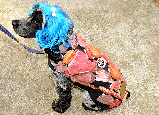 halloween-doggy-costume-best-16