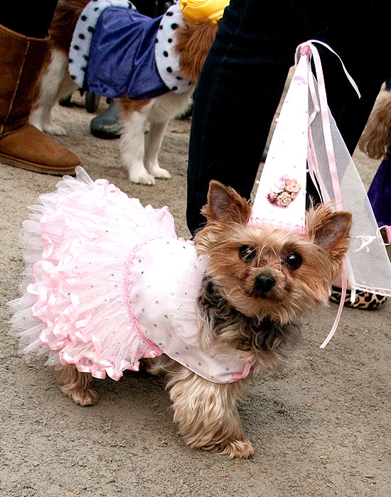 halloween-doggy-costume-best-25