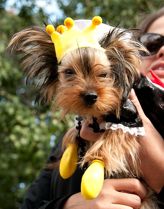 halloween-doggy-costume-best-28