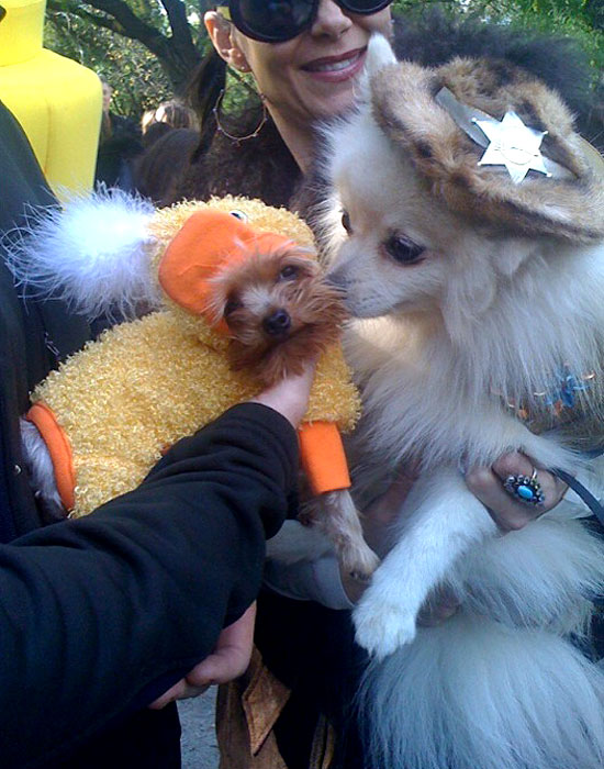 halloween-doggy-costume-best-31