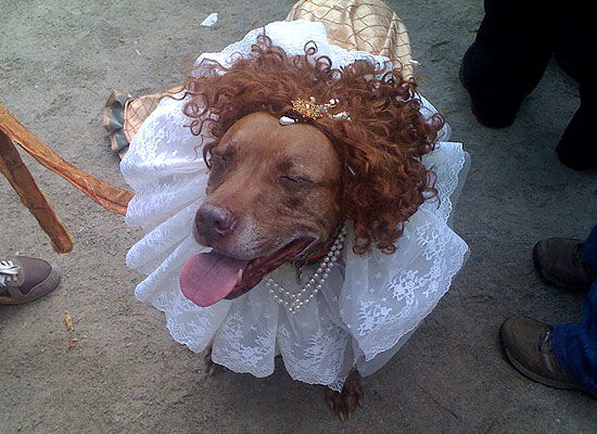halloween-doggy-costume-best-32