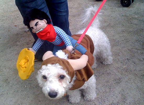 halloween-doggy-costume-best-33