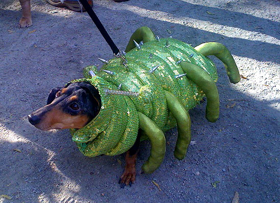 halloween-doggy-costume-best-34
