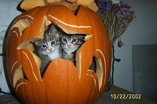 2匹のかわいい子猫とジャックランタン