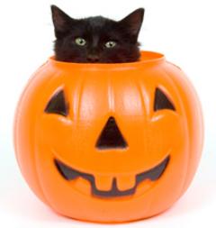 ジャックランタンと黒猫