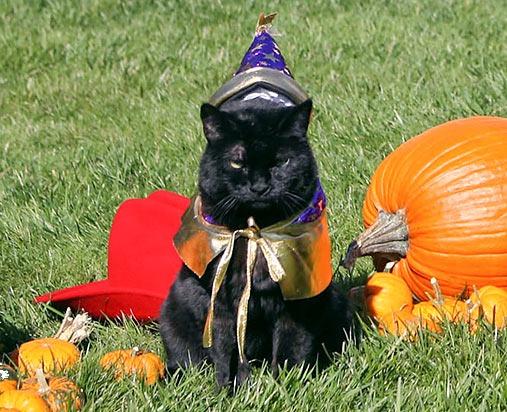 ハロウィン仮装した黒猫