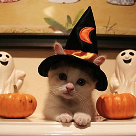 魔女に仮装した子猫