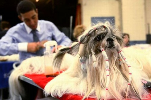 hilarious-dog-haircuts-10
