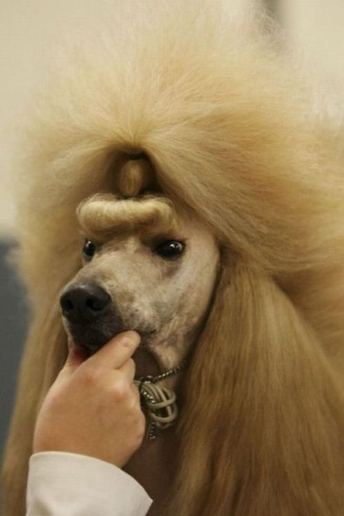 hilarious-dog-haircuts-4