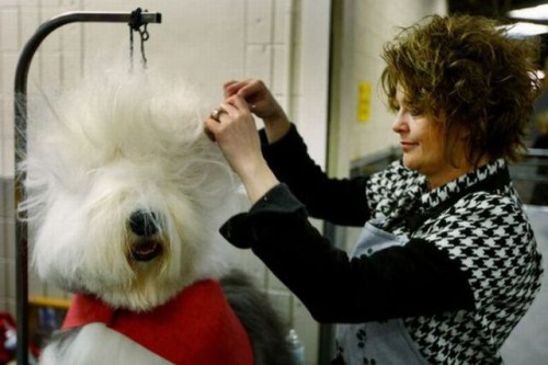 hilarious-dog-haircuts-8