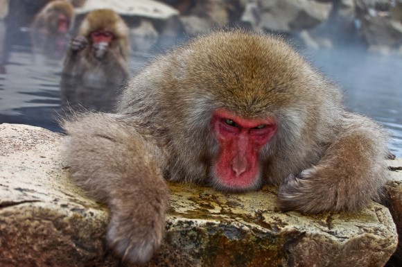 japanese-macaque-winter-04